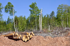 Clear Cutting Stock Image