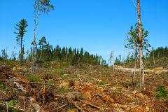 Clear-cutting Operation Stock Photography