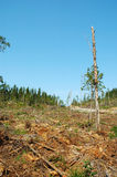Clear-cutting Operation Stock Photos
