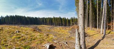 Clear-Cutting of a Pine Forest Stock Images