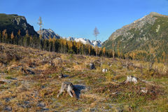 Clear cutting in Tatra Mountain, Slovakia Stock Images