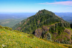 On a Clear Day. Hiking up Saddle Mountain we encountered fields of wildflowers and fir tree covered hills Stock Photos