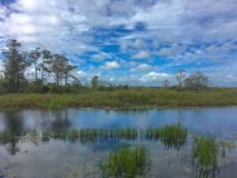 Free Clear Day In A Green Swamp Stock Photography - 104852072
