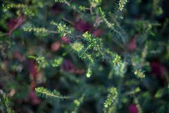 Small plants with bokeh royalty free stock images