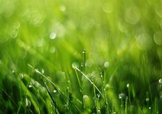 Clear dew drops on green grass early on a Sunny morning. Shiny clear dew drops on green grass early on a Sunny morning Stock Photography