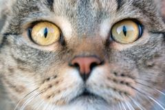 Clear eyes of a healthy cat stock images