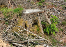 Clear fell 4. Image of a Welsh hillside of clear felled forestry showing the stumps, brash and forest regrowth Royalty Free Stock Photography