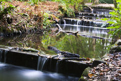 Clear Flowing Stream Royalty Free Stock Images