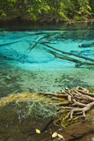 Clear Freshwater In Forest Stock Images