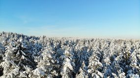 Clear frosty day in the forest. trees covered with snow. bird`s eye view. Russia St. Petersburg region stock photography