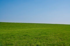 Clear grass field. Minimal processing Stock Photos