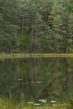Clear lake. Forest reflects in a clear lake in Lithuania Royalty Free Stock Photo