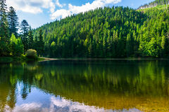Clear lake in the mountains on summer weather. Calm clear lake in the mountains of pine trees planted in fine summer weather Stock Photo