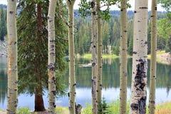 Grand Mesa lake through the Aspens stock photos