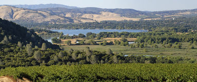 Clear Lake Vineyards. Vineyards in Lake County, California with Clear Lake in the background Royalty Free Stock Photo