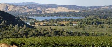 Clear Lake Vineyards royalty free stock photo