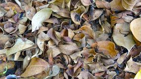 Clear deciduous background stock image