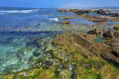 Clear lucid waters at seashore. Clear lucid waters with sea weed at rocky seashore royalty free stock photography