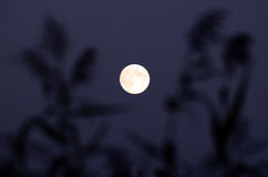 A Clear Moon Stock Photos
