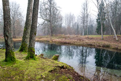 Clear morning by small lake with reflections Royalty Free Stock Photo