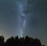 Clear night in the pine forest. Milky Way across the sky Stock Photo