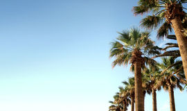 Clear palm trees in the air. Tropical palm trees on a clear big blue sky stock photography