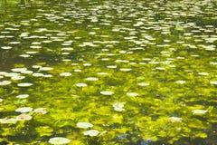 Clear pond Stock Photos