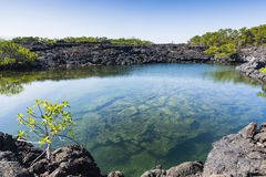 A clear pond at Isabela Royalty Free Stock Image