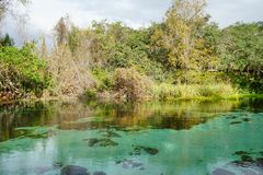 Clear pond. A clear pond in Weeki Wachee state park in Florida Royalty Free Stock Photography