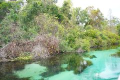 Clear pond. A clear pond in Weeki Wachee state park in Florida Royalty Free Stock Photos