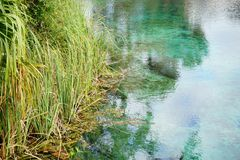 Clear pond. A clear pond in Weeki Wachee state park in Florida Stock Image