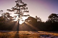 Clear rays of light shining through the forest in Royalty Free Stock Image