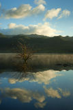 Clear reflecting lake with tree and clouds Royalty Free Stock Images
