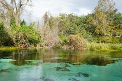 Clear river. And  tree, taken in Weeki Wachee state park in Florida Royalty Free Stock Photos