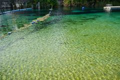 Clear river. And  tree, taken in Weeki Wachee state park in Florida Stock Photo