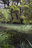 Clear river in Fiordland National Park, South Island, New Zealand Royalty Free Stock Photo