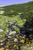 Clear River near Popovo lake, Pirin Mountain Stock Images