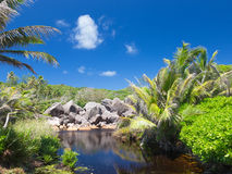 Clear river in the Seychelles Stock Image