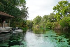 Clear river. And  tree, taken in Weeki Wachee state park in Florida Stock Photos
