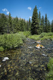 Clear Rocky Mountain Stream Stock Photos