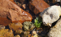 Clear sea water, algae and stones Stock Image