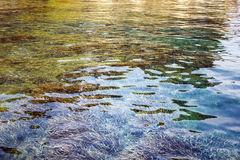 Clear sea water with dense underwater vegetation. Royalty Free Stock Photography