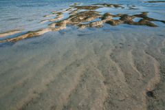 Clear sea water with sand and seagrass Stock Photos
