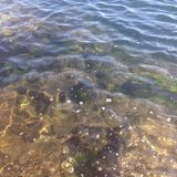 Clear sea water stock photography