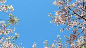 Clear skies full blossom stock video footage