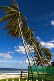 Clear slop cocoanut. Clear slop coconut with blue sky at beach Chumphon Province, Thailand stock photo