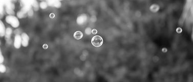 Clear Soap bubbles Stock Photos