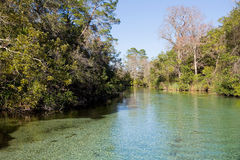 Clear Spring-Fed River. Clear, spring-fed river in Florida stock images