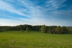 Clear spring sky, farmland field with birches Stock Photography