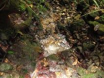 Clear- Springsfluß in tropische Wälder stockbild